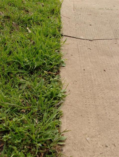 Pasto y asfalto 2 (Large)