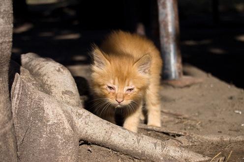 Gato en la quinta de Damián-0925