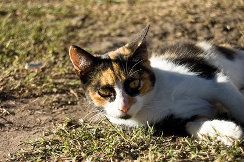 Gato en la quinta de Damián-0977