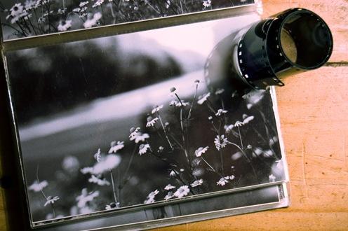 Fotos de fotos - Flores-1867