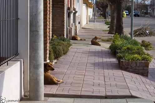 3 perros familiares-2620