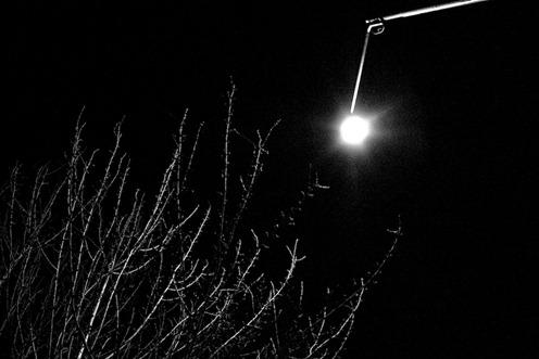 Ramas y luz-4271