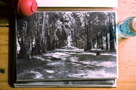 camino en b&n film-1868
