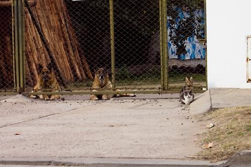Perros y Gatos-4411