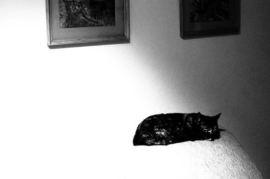 Lila en el sillón-4628