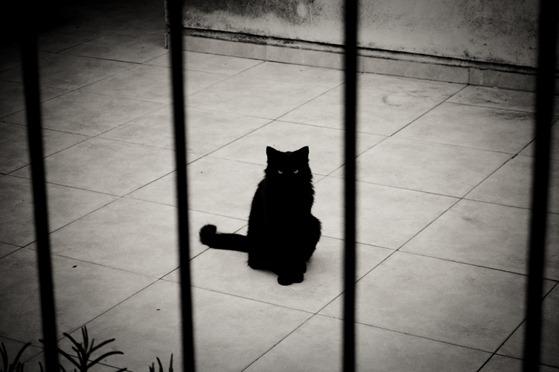 gato negro-4827