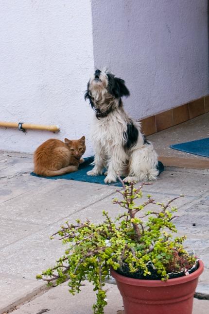 como perro y gato-8528