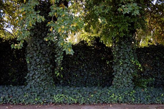 Enriedos en el jardin-8591