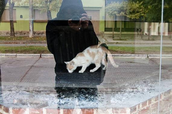 gato en parrilla-8950