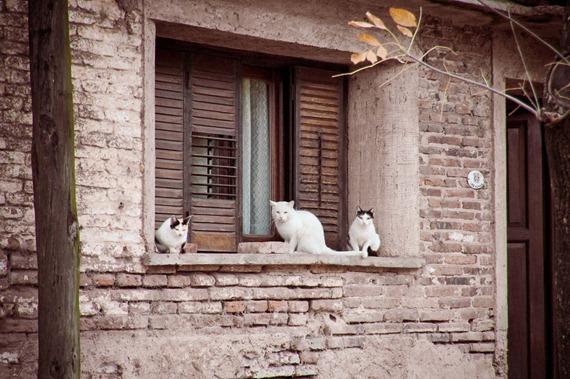 3 gatos locos-8959-2