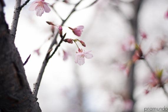 jardin japones-0686