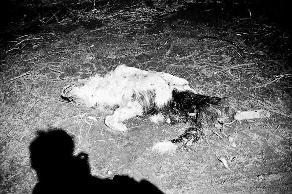 perro muerto-_DSC1268-2