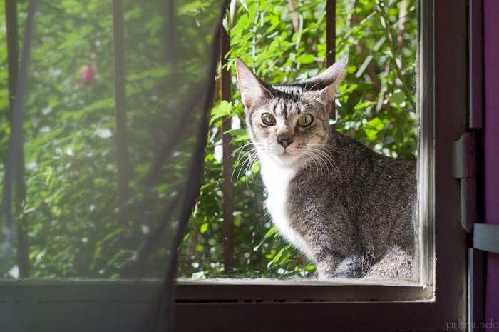 gato en ventana-_DSC5109