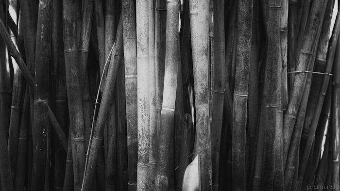 jardin botanico-_DSC8988-Editar
