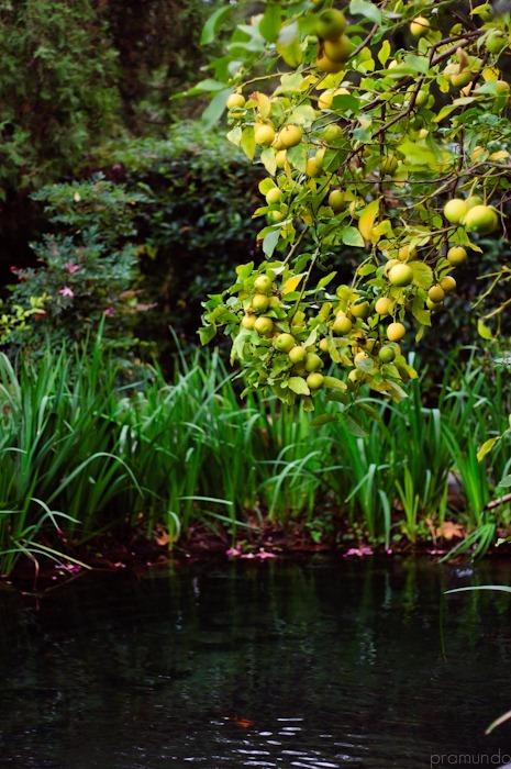 jardin japones-_DSC1505