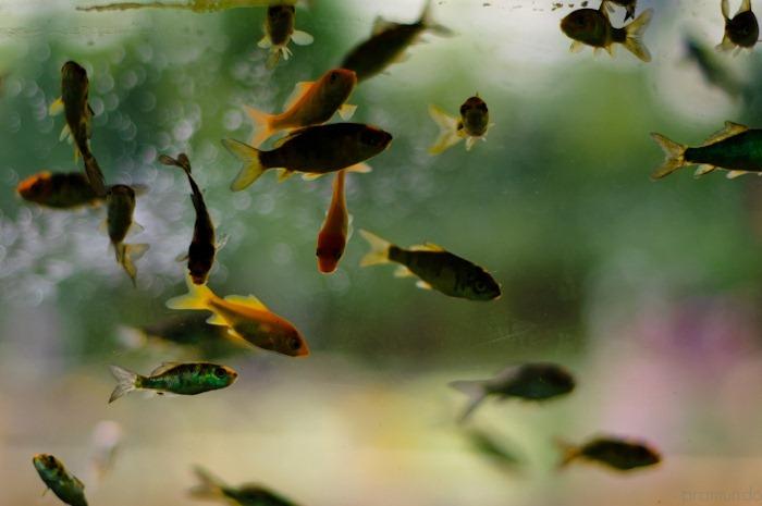 jardin japones-_DSC1510