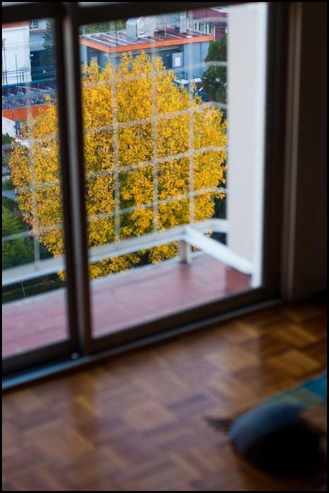 otoño desde la ventana-_DSC4695